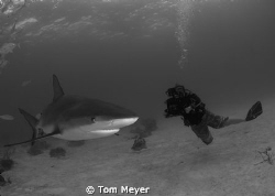 taken with nikon d 200 in a sea and sea housing with toki... by Tom Meyer